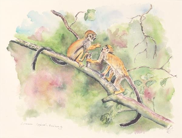 Common Squirrel Monkeys by Elizabeth Sadler