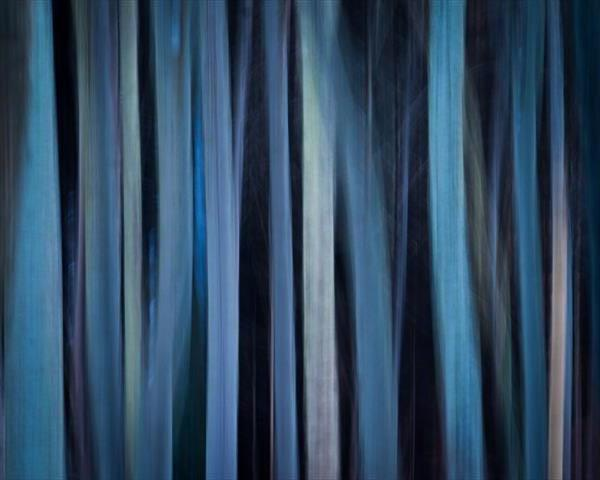 Blue Trees by Peter  O'Reilly