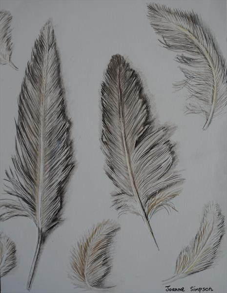 Feathers by Joanne Simpson