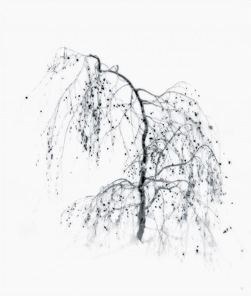Weeping Silver Birch by Georgina Bowater
