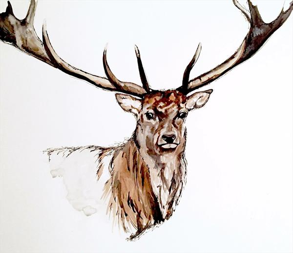 Stag by Rebecca Kelly