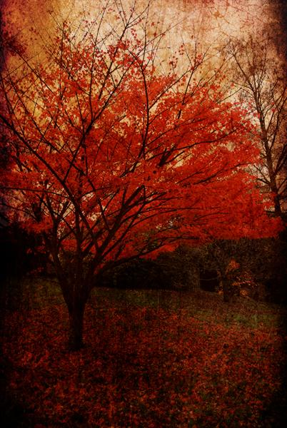 Red Tree by Linda Hoey