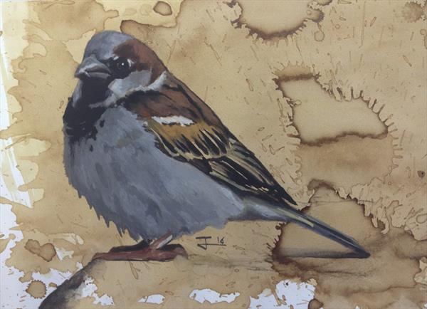 House Sparrow with bib by Steffan Johnson