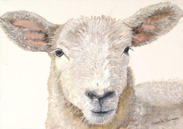 Lamb by Sarah Thomas