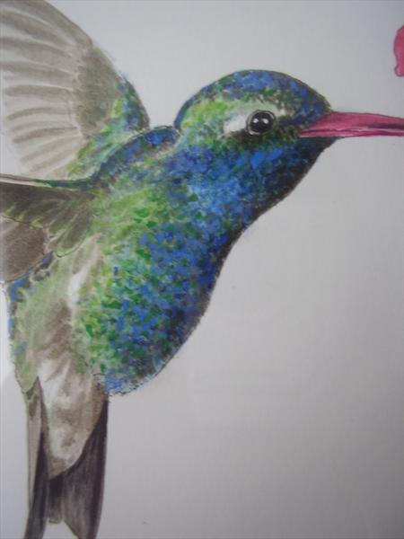 Little Humming Bird Sipping Nectar by Dianne Giblin
