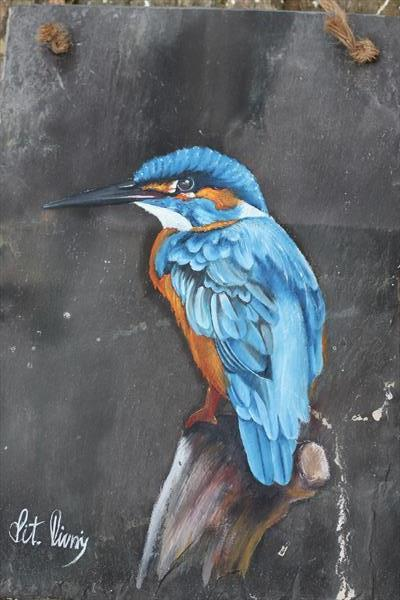 Kingfisher by Vitalie Nastas
