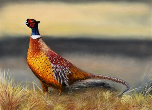 Autumn Glory a Pheasant Portrait  by John Palmer