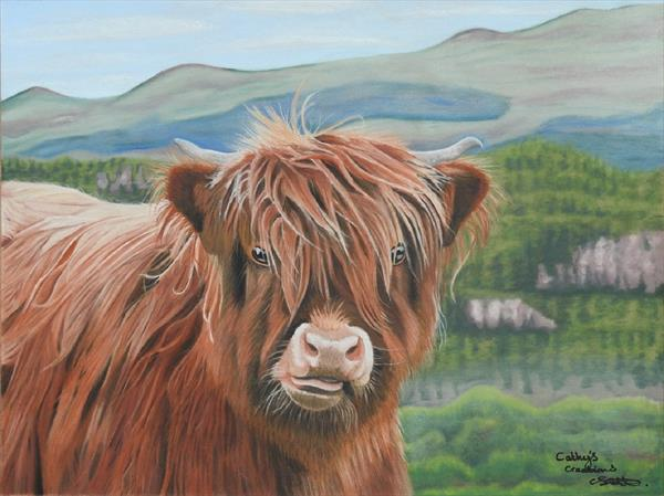 Highland cow calf by Cathy Settle