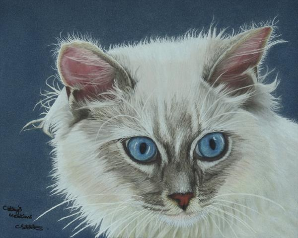 Rag Doll Cat by Cathy Settle