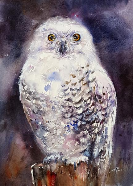 Misty the Snowy Owl by Arti Chauhan