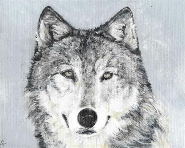 wolf by Claire Farmer