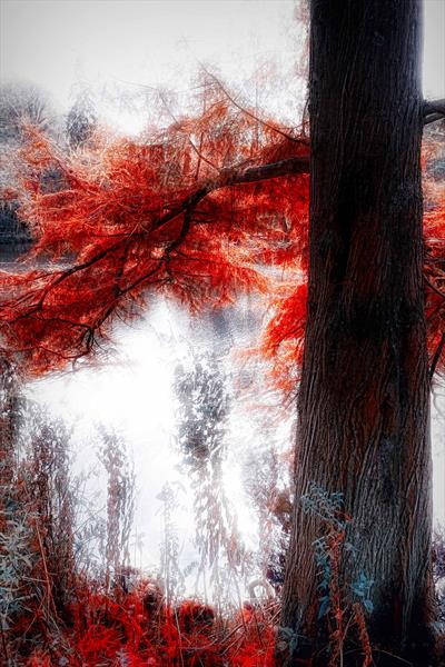 The Red Tree III by Neil Hemsley