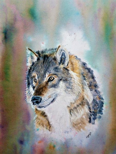 Portrait of a Wolf by Sue  Mobbs