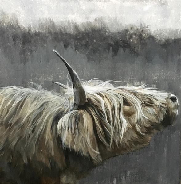 Highlands of grey,highland cow original painting by Paul Hardern