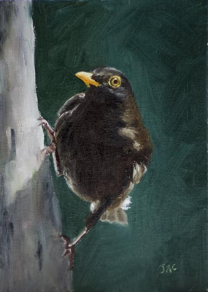 Alert Blackbird by John Crabb