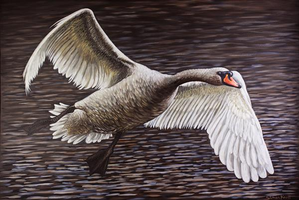 River Severn Swan Gliding by Simon Knott