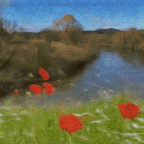 River of Poppies by Forest Arts
