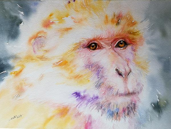 Geraldo the Macaque by Arti Chauhan