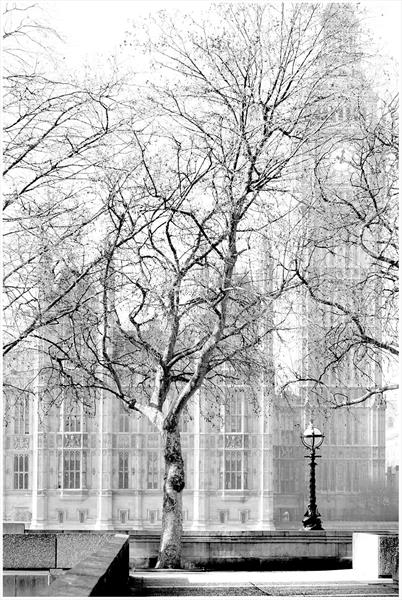 Parliament through the Trees by Paul Milton