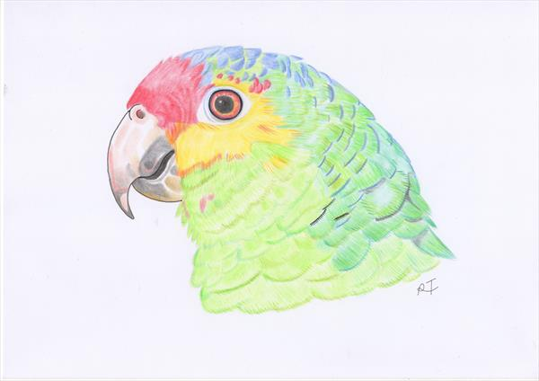 Amazon Parrot by Raven Taylor