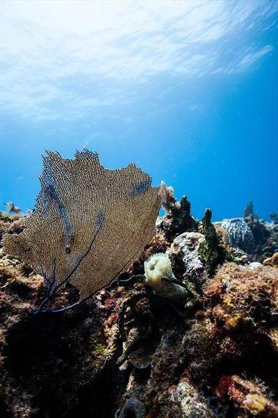 Caribbean Coral Reef by Andy Cain
