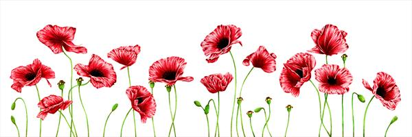 Poppies - Flowers  by Leigh  Townsend