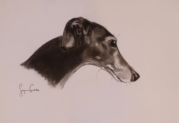 Study of a greyhound head in charcoal by Suzanne Carslake