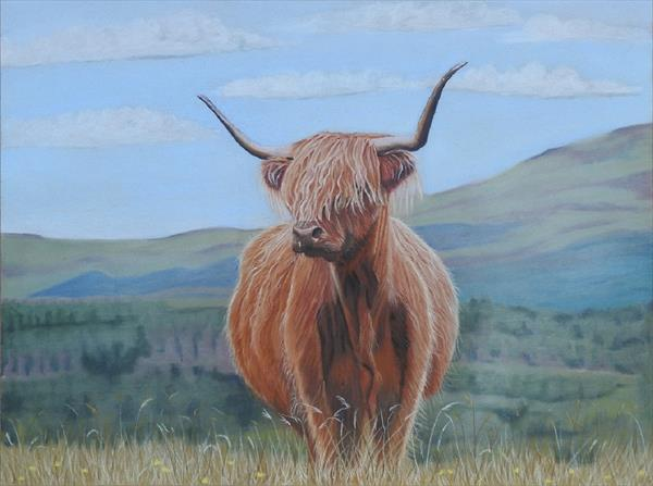 Highland Cow by Cathy Settle