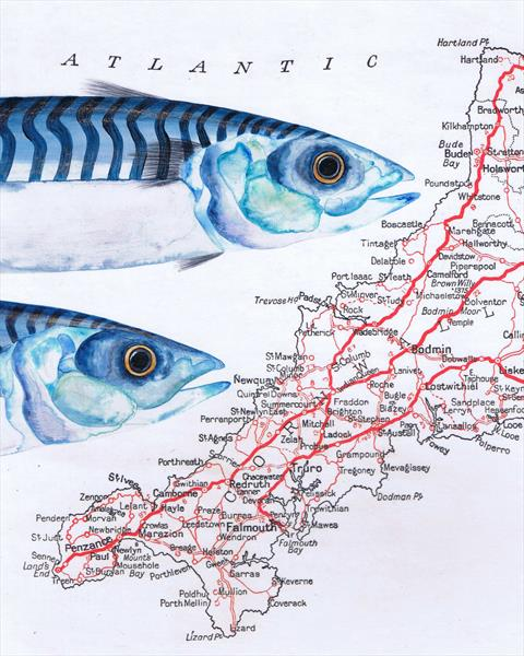 Mackerel on Vintage Map of Cornwall Limited Edition Print by jane Wilson