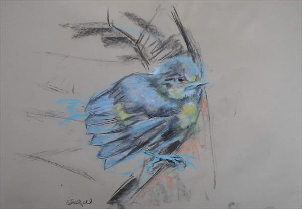 Fledgling in blue by Kate Campbell