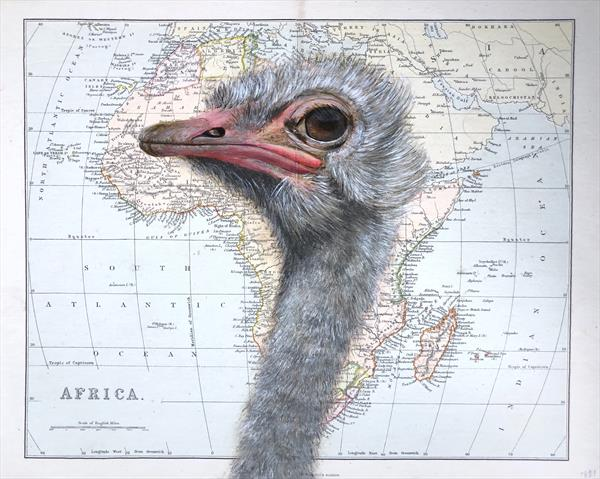 Ostrich on Antique African Map by jane Wilson