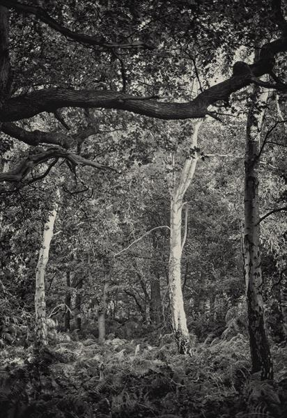 Thieves Wood, Sherwood Forest by Jonathan Talks