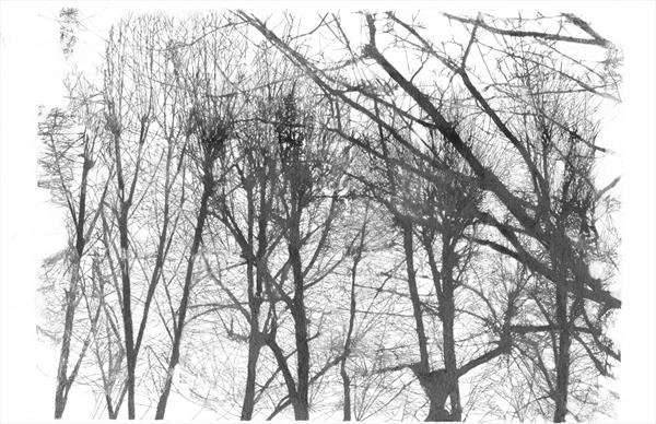 Group of Trees (Limited Edition Silk Screen Print, Unframed) by Daniel Jacobs