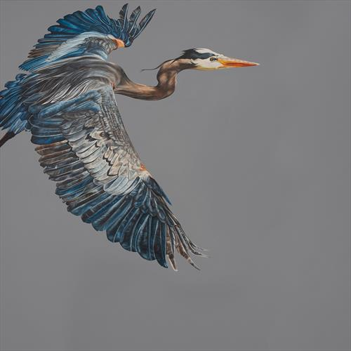 Blue Heron by Natalie Toplass