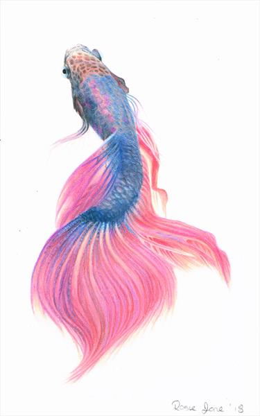 Beta Fish by Rosie Baker