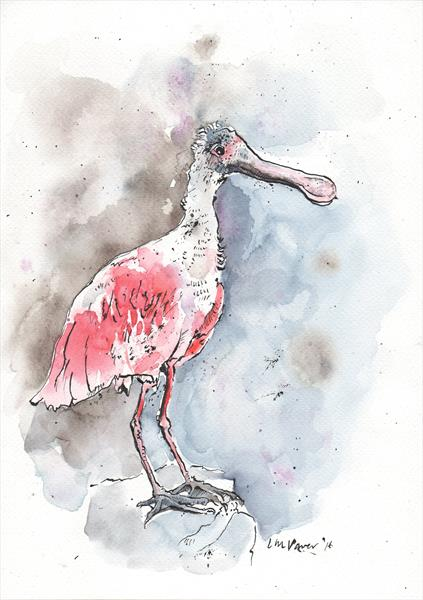 Roseate Spoonbill - watercolour and ink on paper A4