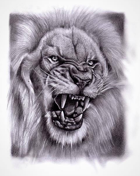 Lion Drawing by Max  Eaton