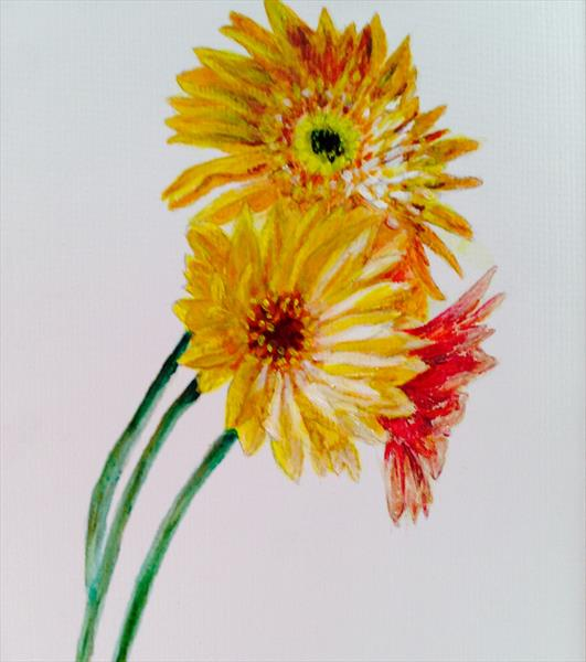 Gerbera for CANCER charity by Sheila Skilton
