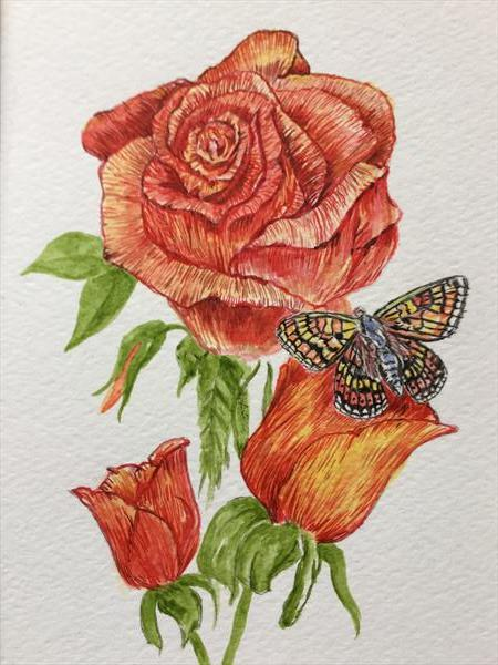 Roses and Marsh Fritillary Butterfly by David King