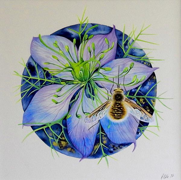 Love in a Mist and Bee Fly by Denise Coble