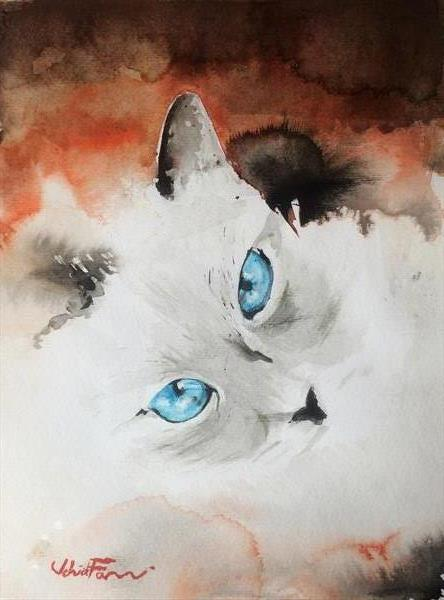 The Blue eyes  by Vahid Farmani Kermani