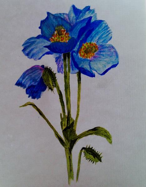 Himalayan blue poppy for CANCER charity by Sheila Skilton