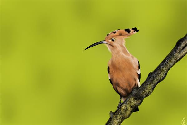 Perched Exotic Bird by Richard Kotchie