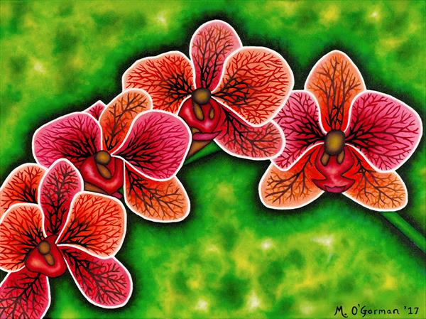 Orchids by Michael O'gorman