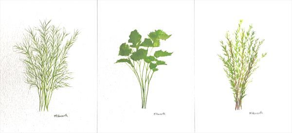 Herbs original watercolours by Monika Howarth
