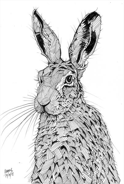 Hare Here Hare by Spencer   Derry