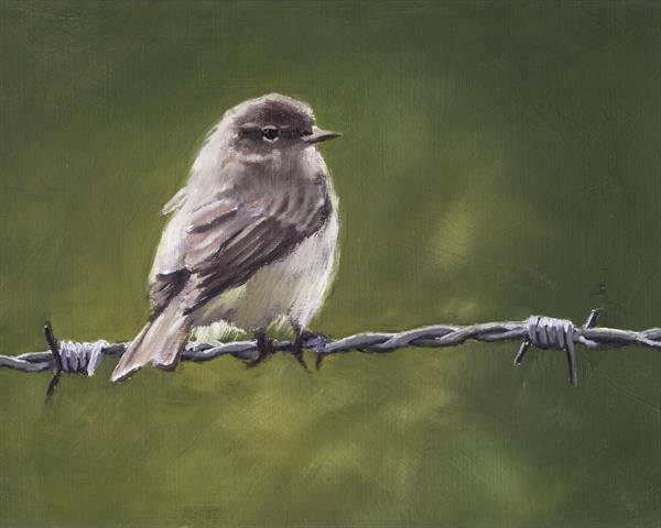Chiffchaff on Wire 3 by John Crabb
