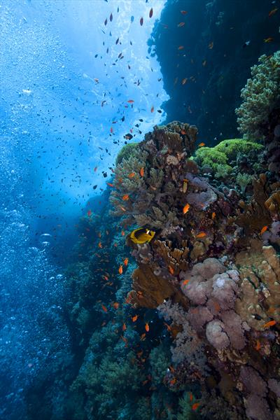 Egyptian Coral Reef by Andy Cain