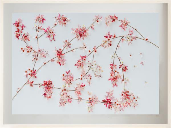 'Oriental Butterfly Cherry Blossom Wall Art by Sara Lawson