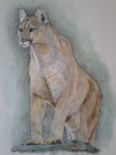 Cougar by Matt McWhirter